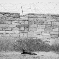 Заключенный :: Daria Shablo
