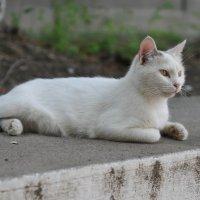 Уличный надзиратель :: Александр Колесников