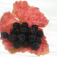 Осени плоды... :: Mariya laimite