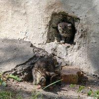 Котята :: Yuri Silin