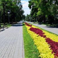 Разные краски июля :: Александр
