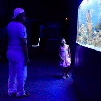 в океанариуме :: Наталия Сарана