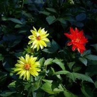 Цветы  ушедшего лета Фото №3 :: Владимир Бровко