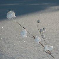 И зимой цветы цветут :: Ирина Останина