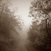 Туман :: Дмитрий Сажин