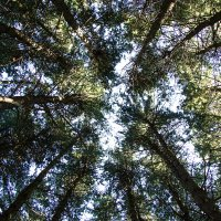 Съезд деревьев :: Эрик Делиев