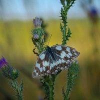 Спящая бабочка :: Вера