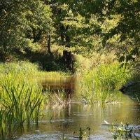 течёт ручей, бежит ручей... :: Виктор _