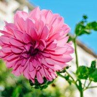 цветок во дворе :: Света Кондрашова