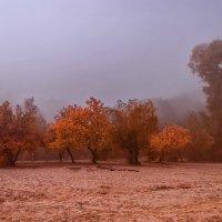 Осенним утром под окном,  туман посорился с дождем... :: Павел