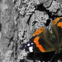 Бабочка :: Анна Бойко