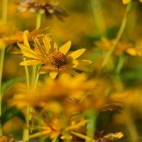 Желтые цветочки :: Иван Птушкин