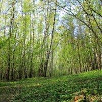 весна :: Людмила Деревянко