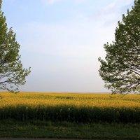пейзаж в желтых тонах :: Olga