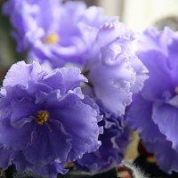 цветочные истории,нежность :: Олег Лукьянов