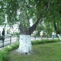 Монастырский покой :: марина ковшова