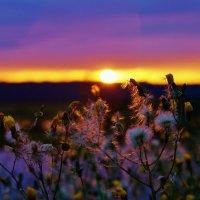 Сияет вечер разными цветами! :: Валентина Налетова
