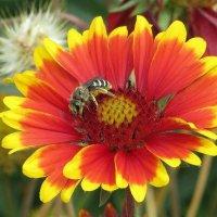 Цвети, бархатный сентябрь! :: Татьяна Смоляниченко