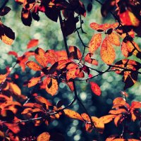 Осенний коллаж :: Swetlana V
