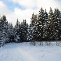 Зима в Твери. :: Виктор ЖИГУЛИН.