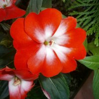 Цветочек....аленький :: Алёна Савина