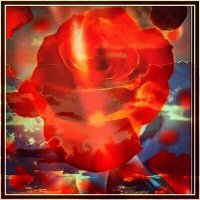 небесная роза :: Ольга Сафонова