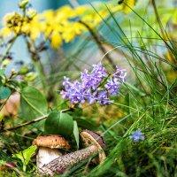 В сентябре цветет сирень :: Борис Устюжанин