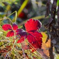 Вот и осень !!! :: Олег Кулябин
