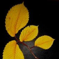 Ветка для гербария :: Лебедев Виктгр