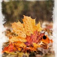 Осень :: Alexander Demetev