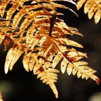 Опаленные осенью :: Swetlana V