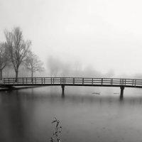 Утро туманное :: Светлана Щербакова