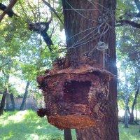 Лесной домик. :: Андрей