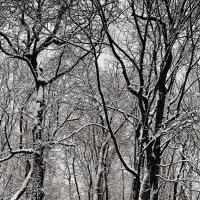 Чёрно-белый мир. :: Андрий Майковский
