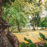 Взгляд из за дерева :: Вячеслав Баширов
