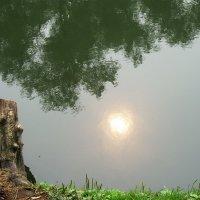 Отражение солнца в воде. Подмосковье :: татьяна