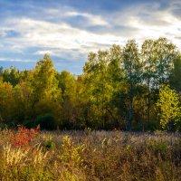 Теплая осень. :: Владимир Лазарев