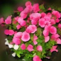Цветы.. :: Владимир Сквирский