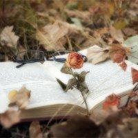 ПРИБЛИЖАЕТСЯ ВРЕМЯ ОСЕННИХ ФОТОСЕТОВ :: АЛЕКСЕЙ ФОТО МАСТЕРСКАЯ