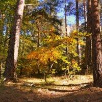 Осень :: Клара