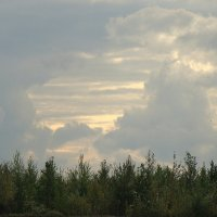 После дождя :: Елена Перевозникова