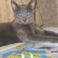 Котик :: МИЛА Иванова
