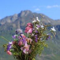 Горные цветы Чегета :: Александр Алексеенко