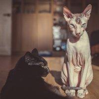 Такие разные кошки :: Анна Вязьмина-Кирилюк