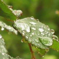 После дождика :: Михаил Цегалко