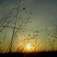 Осенний вечер :: Ирина Останина