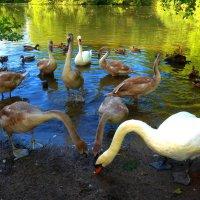 Лебединое озеро (серия) Трио и компания :: Nina Yudicheva