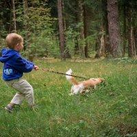 Прогулка с собакой :: Алексей Леухин