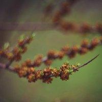 Весна :: Ира Фалина
