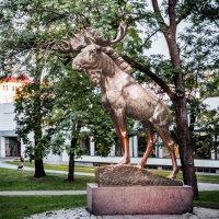 Elk :: Илья В.
